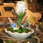 Die im Frühjahr blühende Hyazinthe